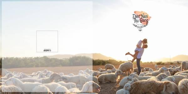 Đừng ngạc nhiên khi ở Hồ Cốc vẫn có những đàn cừu không khác gì Phan Rang - Ninh Thuận