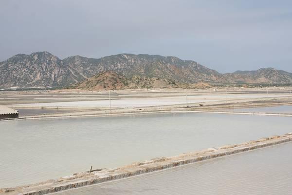 Description: Cánh đồng muối ở Phan Rang. Ảnh: San San