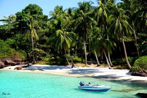 Hàng dừa xanh mát trên đảo Móng Tay.