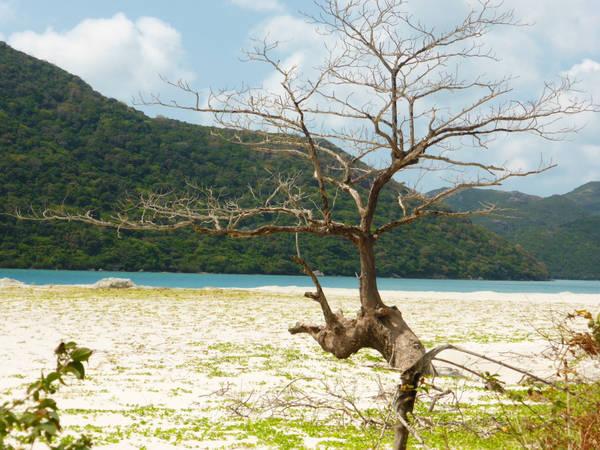 Vẻ đẹp của Côn Đảo có thể nói là hoàn hảo, bởi nơi đây may mắn hội tụ được tất cả những gì tốt nhất cần có của một bãi biển đẹp. Ảnh: Paul Arps