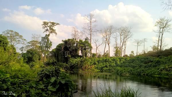 Rừng cây trên đỉnh thác Dray Sap. Ảnh: Tiểu Duy