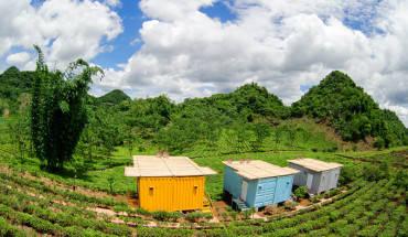 du-lich-moc-chau-ngu-bungalow-container-ngam-nhung-doi-che-xanh-mat-ivivu-5