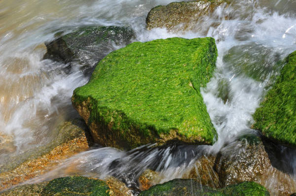 Description: Rêu xanh bám chắc vào các tảng bêtông - Ảnh: Dương Thanh Xuân