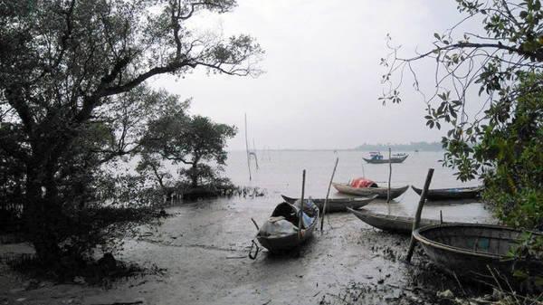 Description: Tàu thuyền neo đậu núp dưới những tán rừng ngập mặn - Ảnh: LÊ TRUNG