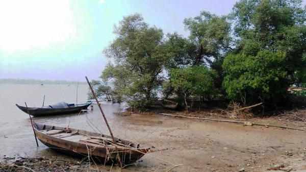 Description: Một góc rừng ngập mặn thơ mộng ở xã Tam Giang - Ảnh: LÊ TRUNG