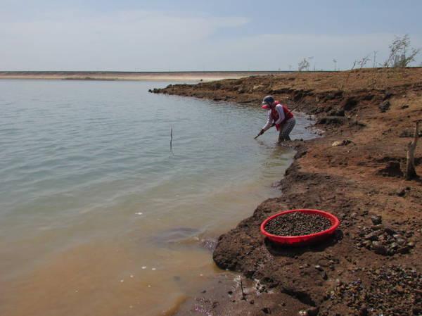 Description: Một phụ nữ đang cào hến trên hồ Sông Ray - Ảnh: Nguyễn Thiên Đăng