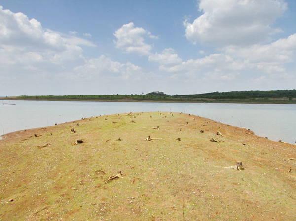Description: Một dãy đất đầy vỏ hến, phần màu trắng li ti là những vỏ hến nằm ngửa - Ảnh: Nguyễn Thiên Đăng