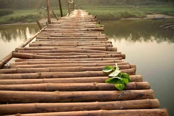 Một cọng rau rơi trên cầu
