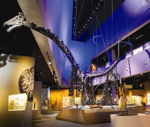Bộ sưu tập hóa thạch khủng long khổng lồ và hoành tráng tại Bảo tàng Lịch sử Tự nhiên Lee Kong Chian