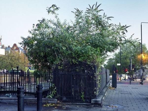 """Agnese cho biết: """"Chúng là một phần đặc biệt của thành phố tuy nhiên không còn ai sử dụng và để ý tới nữa nên chúng cũng là những không gian bị bỏ quên"""". Một nhà vệ sinh cổ khác ở Standford Hill, phía bắc London lại bị cây cỏ mọc um tùm che kín."""