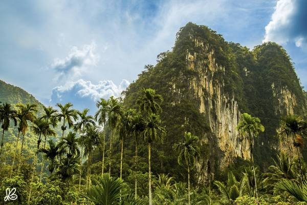 Khung cảnh xanh rì của Vườn Quốc gia Khlong Phanom. Vườn quốc gia này tọa lạc tại huyện Phanom, phía Tây Nam tỉnh Surat Thani.
