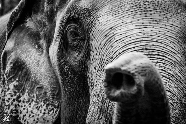 Một chú voi trên đường phố Chiang Mai dưới góc nhìn của Ian Barin.