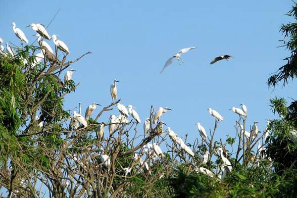 Description: Đảo Cò với hàng nghìn con làm tổ.