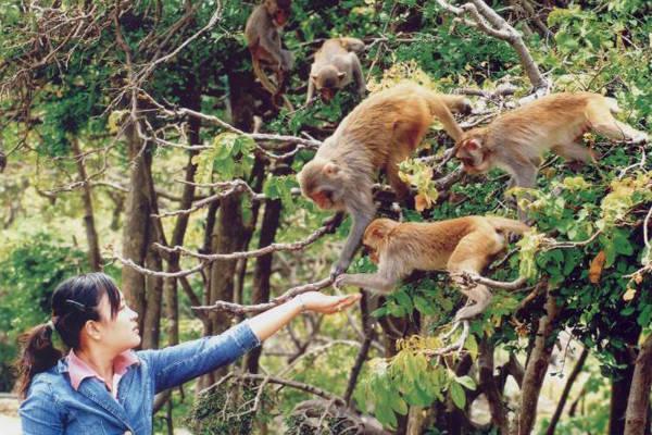 Description:  Đảo Khỉ sẽ đem tới cho bạn một cảm giác rất đặc biệt, vừa sợ hãi vừa thú vị.