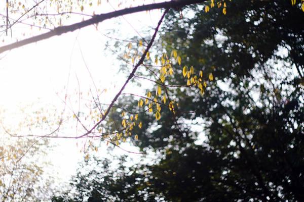 Những lộc non vươn mình trong nắng chiều - Ảnh: Bùi Minh Đức