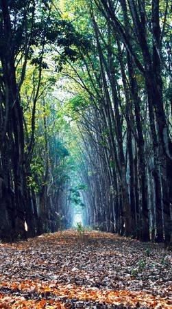 Lối đi hun hút giữa cánh rừng, chỉ còn một chấm sáng xa thẳm - Ảnh: Bùi Minh Đức