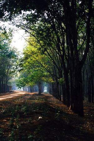 Màu xanh khói lam chiều vờn bay trên con đường đất đỏ - Ảnh: Bùi Minh Đức