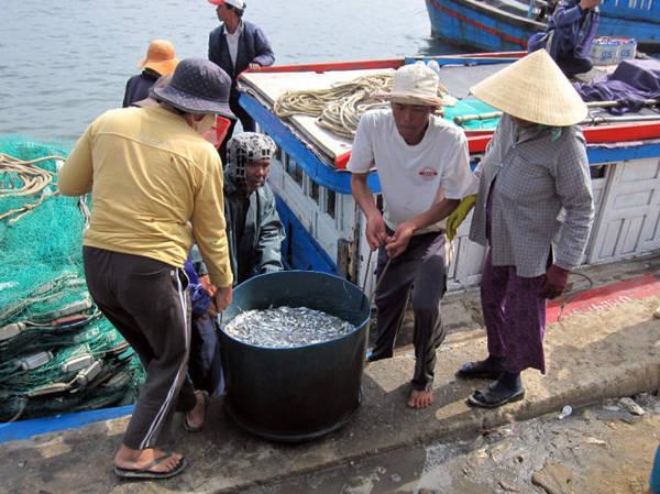 Vận chuyển cá cơm vào bờ - Ảnh: Minh Kỳ