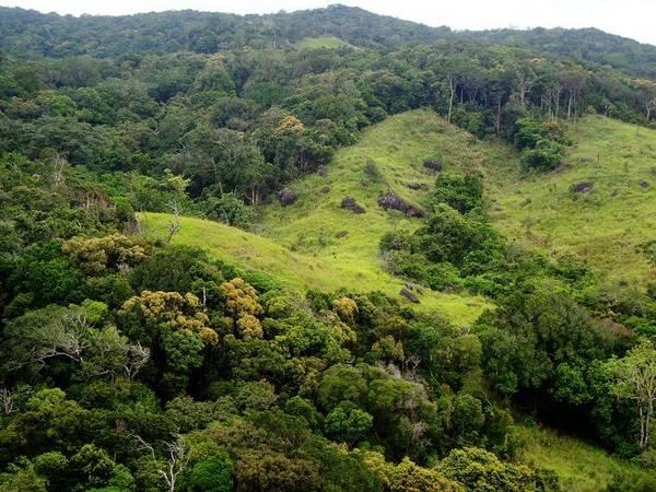 Description: Khung cảnh xanh tươi của Vườn quốc gia Núi Chúa. Ảnh: ST