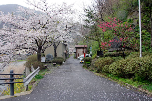 Yamagata nổi tiếng bởi hoa anh đào nở rộ quanh những con suối hiền hòa.