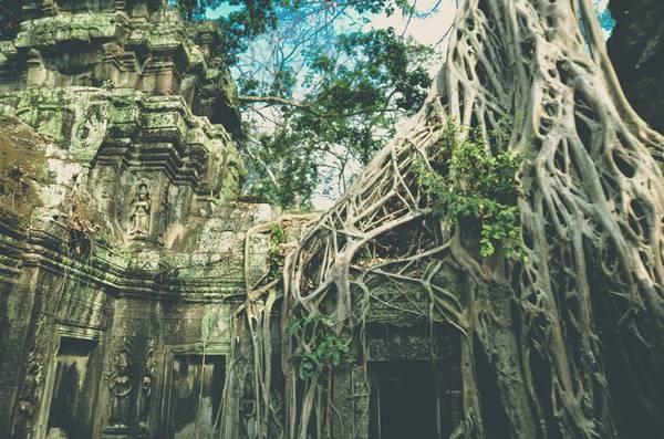 Đền Ta Prohm còn được gọi là Lăng mộ Hoàng hậu, nơi những cây cổ thụ vĩ đại bao phủ nhiều công trình, tạo nên những hình thù cổ quái và hấp dẫn.