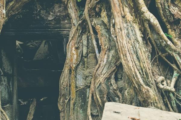 Bức tượng Phật mỉm cười nằm trong gốc cây hàng nghìn năm tuổi. Tại Angkor, người ta không thắc mắc về những điều kì lạ vì chẳng ai có thể có câu trả lời. trả lời.
