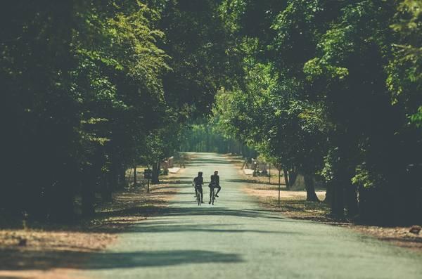 Con đường tới đền Ta Prohm đem lại cảm giác thanh thản và yên tĩnh.
