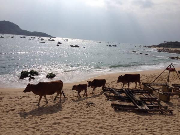 Khung cảnh biển ở đây rất hoang sơ.