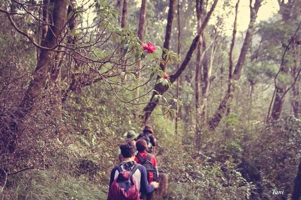 Chúng tôi mải miết đi trên những con đường mòn. Đầu tháng 3 đến tháng 4 là thời điểm rất nhiều loài hoa rừng ra hoa, khung cảnh rất đẹp.