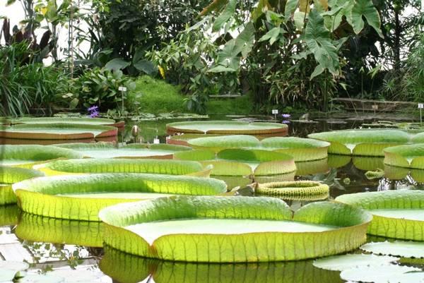 Chùa Phước Kiển (hay còn gọi là Chùa Lá Sen): Tọa lạc tại xã Hòa Tân, huyện Châu Thành. Chùa trồng một loại sen có lá khổng lồ với đường kính từ 1,5 đến 2 m, dày, gân lá to, mép cao đến 4-5 cm làm lá giống như một cái nia trông lạ mắt. Đặc biệt lá có thể chịu được sức nặng của một người lớn đến 70kg.Ảnh: dulichmt.blogspot