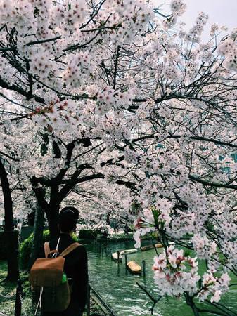 Đang có mặt ở Nhật Bản đúng mùa hoa anh đào nở rộ, nhiếp ảnh gia sinh năm 1988 Nguyễn Thiện Chí ở TP HCM đã tranh thủ ghi lại những khoảnh khắc tuyệt diệu của mùa xuân đất nước mặt trời mọc.