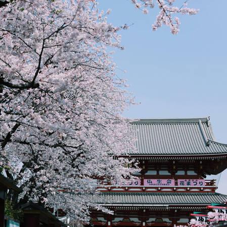 Theo tư vấn của Thiện Chí, những điểm đến ngắm hoa đào đẹp ở Tokyo bạn có thể ghé qua những ngày này là công viên Uneo, công viên Yoyogi, sông Meguro, công viên Sumida, khu vực Hakone gần núi Phú Sĩ... Không khó để kiếm được địa điểm đẹp bởi đâu đâu ở Tokyo cũng được coi như một studio ngoài trời lãng mạn cho bạn thỏa sức sáng tạo.