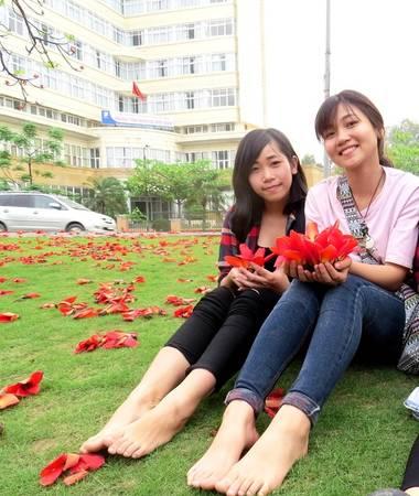 Linh chia sẻ, chưa bao giờ được nhìn nhiều hoa gạo nở đẹp đến vậy...