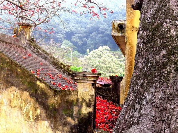 Xác hoa rơi phủ đỏ một phần mái đền cổ, rêu phong.