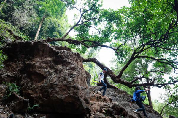 Bạn trẻ bám vào những cây cổ thụ, mỏm đá để xuống chân thác - Ảnh: Tiến Thành