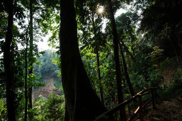 Những cây rừng cổ thụ quanh khu vực thác Đắk G'lun - Ảnh: Tiến Thành
