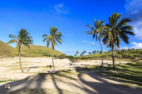Cảnh quan thiên nhiên tươi đẹp ngày nay của đảo Phục Sinh thu hút ngày càng nhiều khách du lịch nước ngoài. Chúng tôi có thể dạo chơi trên những bãi biển rợp bóng dừa bên cạnh những tượng đá Moai bí ẩn thách thức với thời gian.