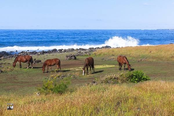 Đảo Phục Sinh không nổi tiếng khách với các resort sang trọng, những bãi tắm đẹp, những món ăn ngon, mà làm say đắm lòng người bởi phong cảnh thanh bình và những điều bí ẩn cần được khám phá.