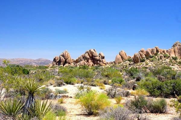 Một góc sa mạc Mojave - Ảnh: pinterest