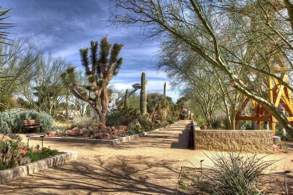 Vườn xương rồng ở Springs Preserve - Ảnh: wiki
