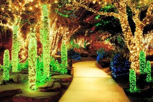 Lễ hội ánh sáng mùa đông hằng năm ở Springs Preserve - Ảnh: pinterest