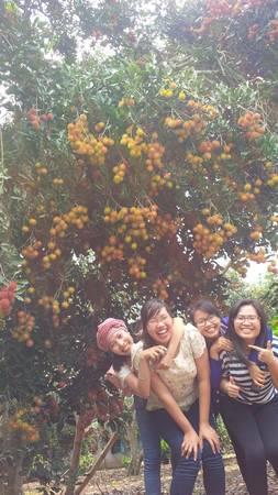 Những vườn cây trái trĩu quả ở Long Khánh là điểm chụp hình yêu thích của nhiều bạn trẻ. Ảnh: San San