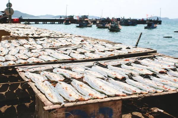 Những phên cá xương xanh trên bờ kè cảng - Ảnh: Minh Đức