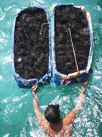 Những ngư dân mò cầu gai với mẻ thu hoạch - Ảnh: Minh Đức