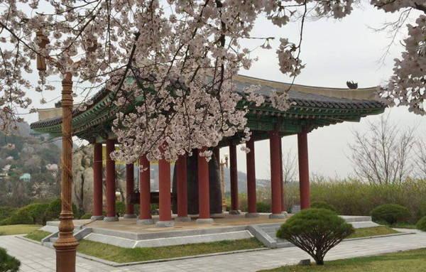 Hoa đào ở thành phố Mokpo - Ảnh Hiếu Ngọc Châu