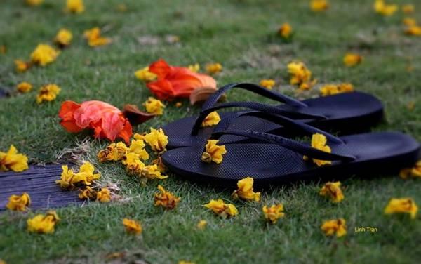 Loài hoa ấy gắn liền với kỷ niệm về TP HCM. Mùi hương của hoa phải lại thật gần mới cảm nhận được, một mùi hương thơm êm dịu như chạm vào môi.