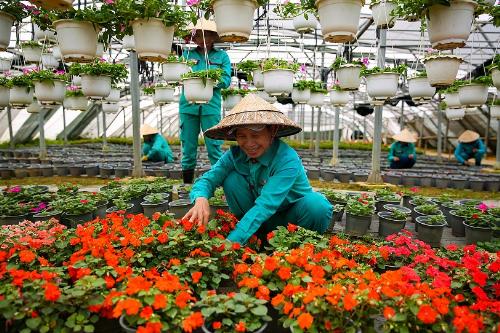Từ chỗ chỉ có 10 giống hoa tự nhiên, đến nay Bà Nà Hills đã có hàng trăm loài hoa khoe sắc. Hàng ngày, trong vườn ươm rộng đến cả hecta, đội ngũ kỹ sư, công nhân cây cảnh vẫn bền bỉ ươm trồng các giống mới. Không chỉ là một Bà Nà bốn mùa hoa, trong tương lai, nơi đây hứa hẹn sẽ thành điểm đến cho các Festival hoa chuyên nghiệp, đẳng cấp, mang tầm quốc tế.