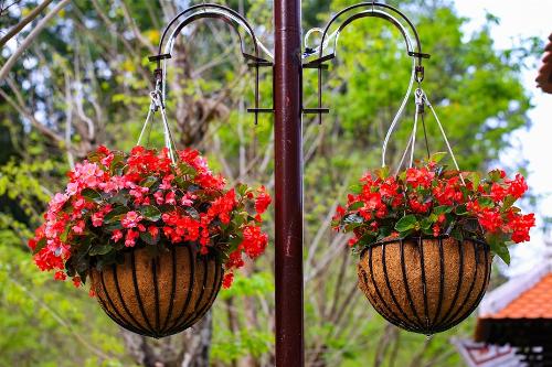 Các công trình mang đậm phong cách Pháp trở nên mềm mại và lãng mạn hơn khi được điểm xuyết bằng các giỏ hoa thu hải đường duyên dáng.