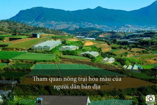 Vùng ngoại ô Đà Lạt có rất nhiều trang trại trồng rau, hoa màu của người dân bản địa. Du khách có thể xin chủ trang trại vào tham quan, chụp hình. Người dân ở đây rất dễ gần và mến khách.