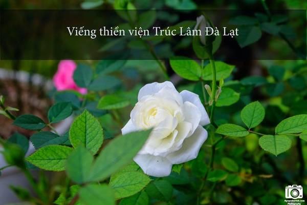 Thiền viện có kiến trúc rất đẹp và cổ kính, nằm lọt thỏm trong những cánh rừng thông xanh mát. Khuôn viên thiền viện trồng rất nhiều loài hoa đẹp và đặc trưng của Đà Lạt như hoa móng rồng, hoa cẩm tú cầu, hoa hồng…